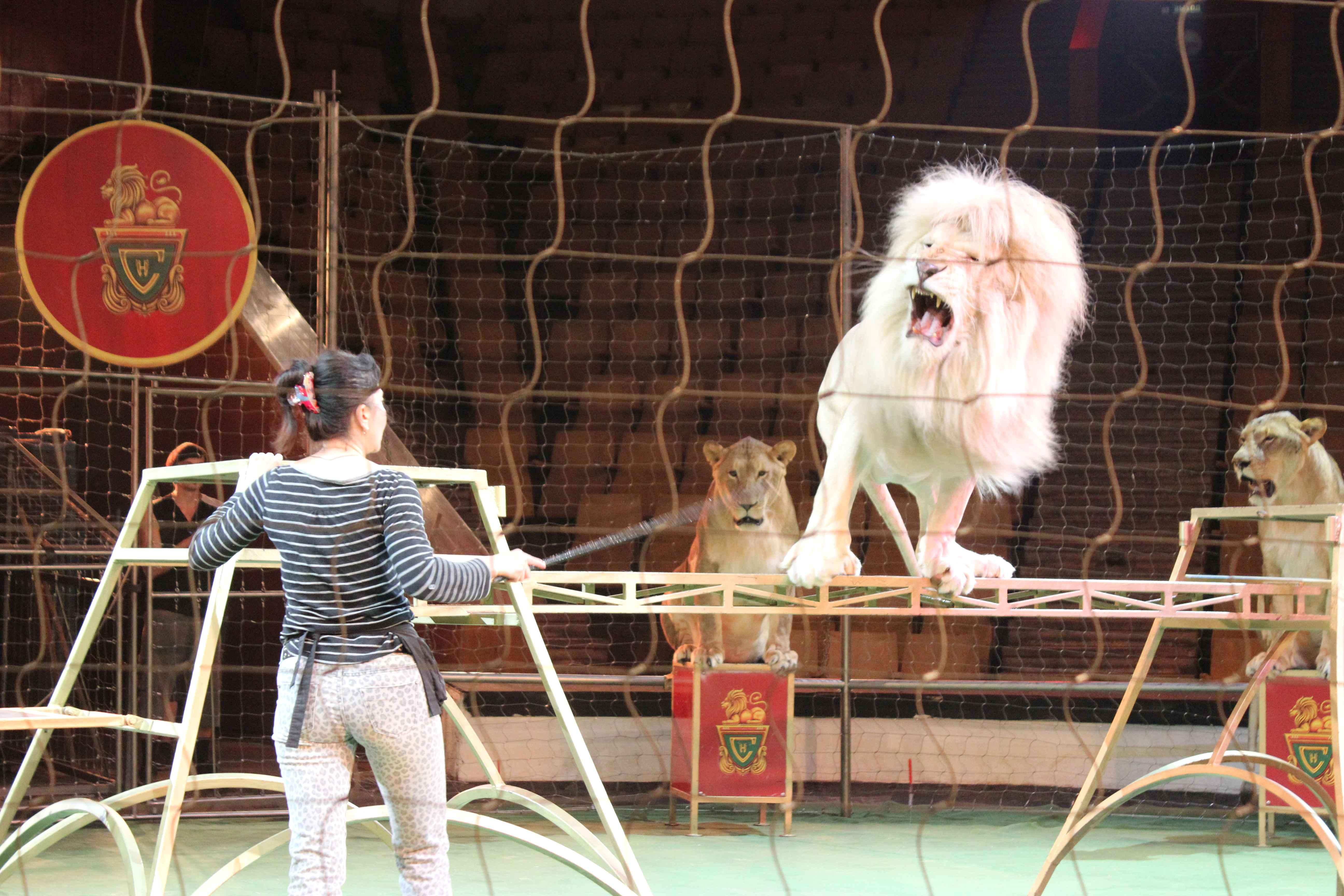 фото ленинград цирк скошенного