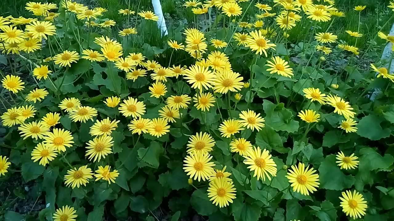 Какие цветы оптимально сажать в тени