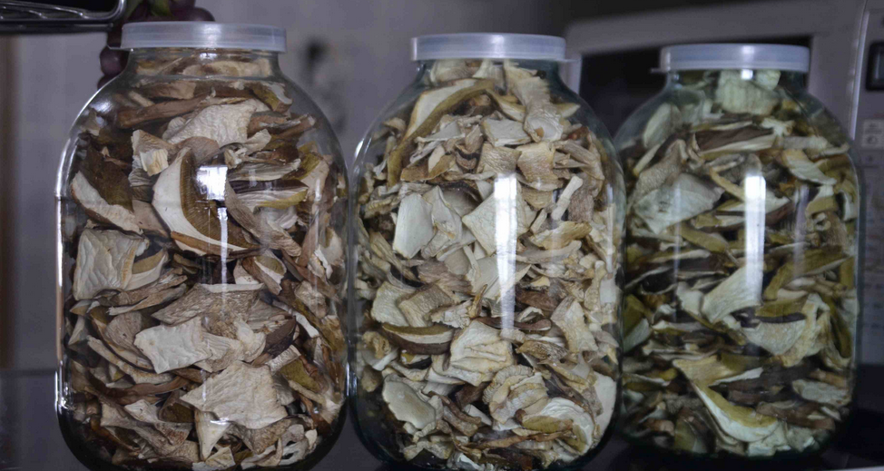 Какая польза от сушеных грибов для организма человека