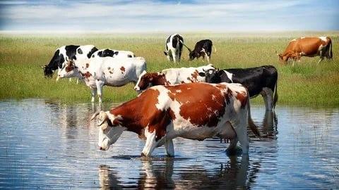 Что означает сон, в котором снится корова