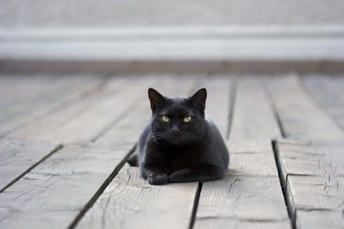 Какую весть принесла кошка: приметы про домашнего питомца