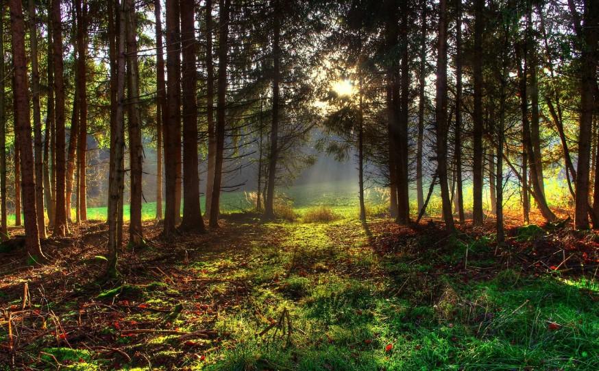 Браконьеры в Кирове: 11 тысяч кубометров леса вырублены незаконно
