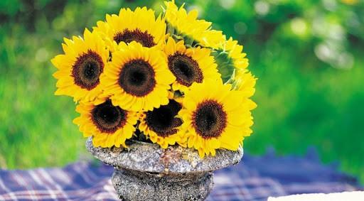Цветы и знаки зодиака: какие растения нельзя дарить и держать дома по гороскопу